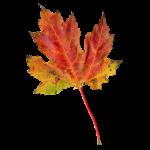 Autumn-Leaf-PNG-Transparent-Image-2